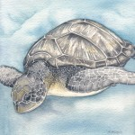Turtle Dive by Alison Sturgess - Original Artwork