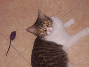Saffy, missing from Buzanada, Tenerife